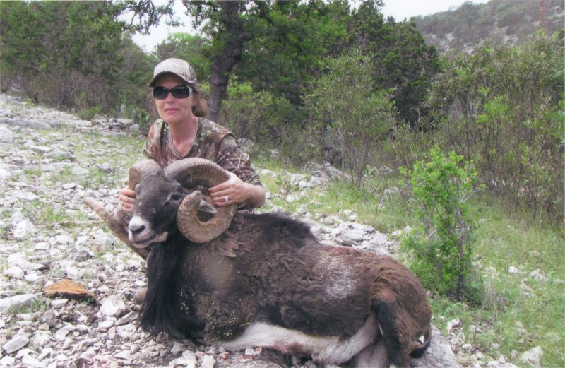 image from www.hillcountrybighorns.com